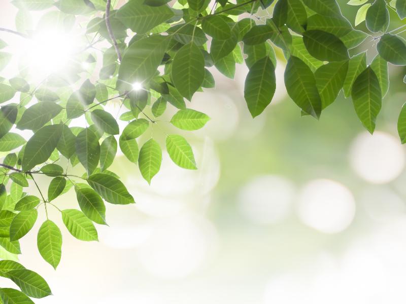 Lightness in trees